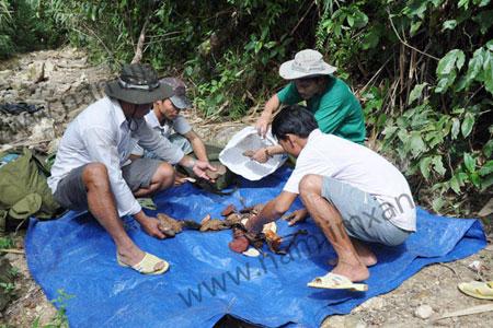 Nấm lim xanh trong rừng Quảng Nam