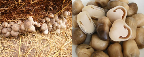 Nấm rơm có chứa hàm lượng protein phù hợp với người đang giảm cân
