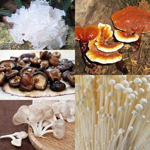 Một số loại nấm chữa bệnh phổ biến trong cuộc sống