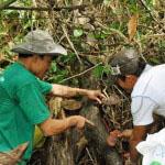 Những hình ảnh sinh động về Nấm lim xanh trong rừng Quảng Nam