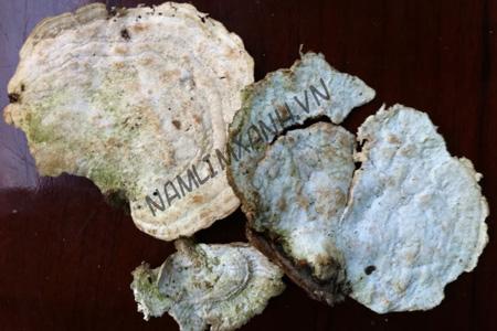 Các loại nấm dược liệu quan trọng trong y học truyền thống và hiện đại