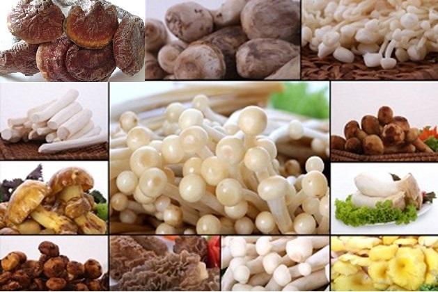 Những loại nấm tốt cho sức khỏe mọi người, mọi nhà