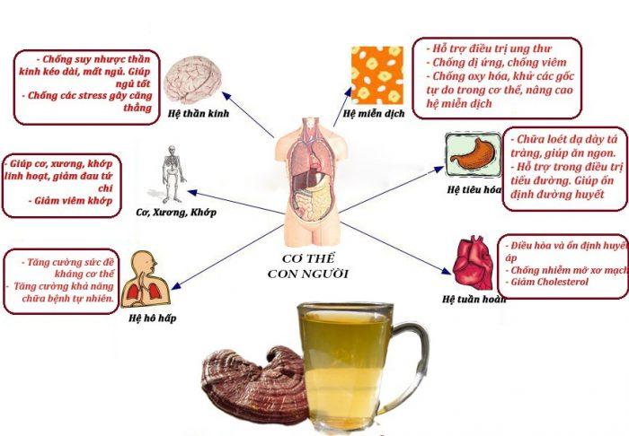 Chữa bệnh là một trong những vai trò của nấm với con người