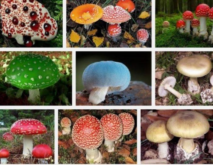 Một số loại nấm độc có thể gây chết người, không chọn mua nấm không có nguồn gốc rõ ràng.