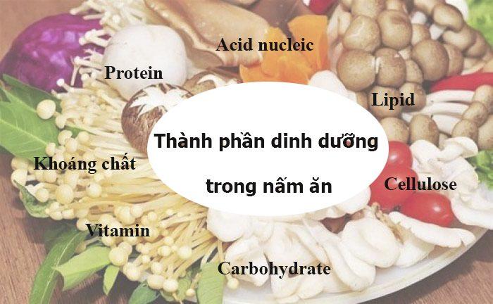 Thành phần dinh dưỡng trong nấm ăn rất phong phú