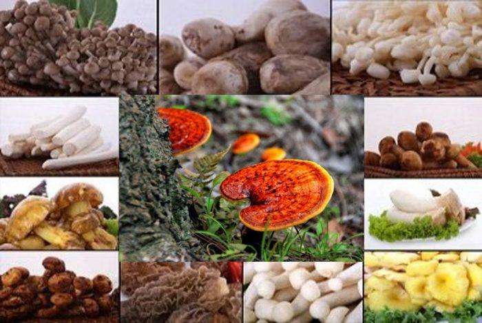 Các loại nấm có công dụng làm đẹp da