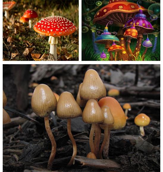 Nguồn gốc sử dụng loài nấm ma thuật.