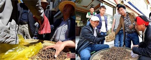 Đông trùng hạ thảo bán trên thị trường có giá lên đến 1 tỷ đồng/kg