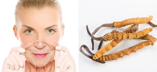 Nấm đông trùng hạ thảo tốt cho làn da phụ nữ bởi tác dụng ngăn ngừa lão hóa hiệu quả