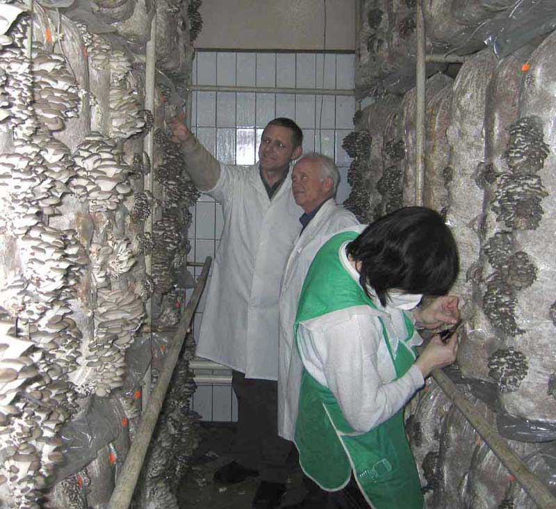 Công nghệ nuôi trồng nấm ăn và nấm dược liệu