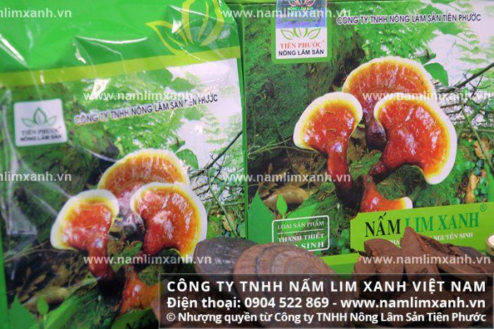Nấm lim đạt chuẩn được phân phối từ Công ty TNHH Nấm lim xanh Việt Nam