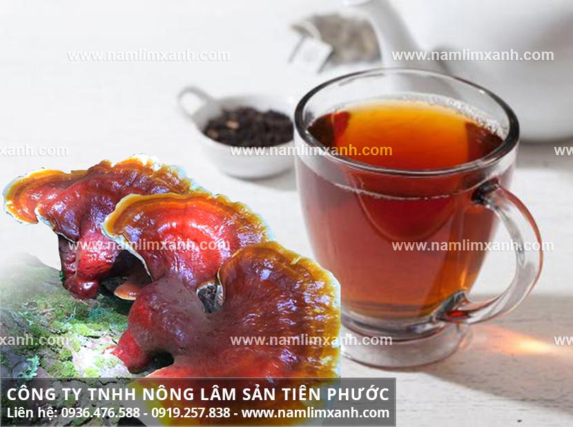 Uống nấm lim xanh kiêng gì với cách sử dụng nấm gỗ lim xanh Tiên Phước