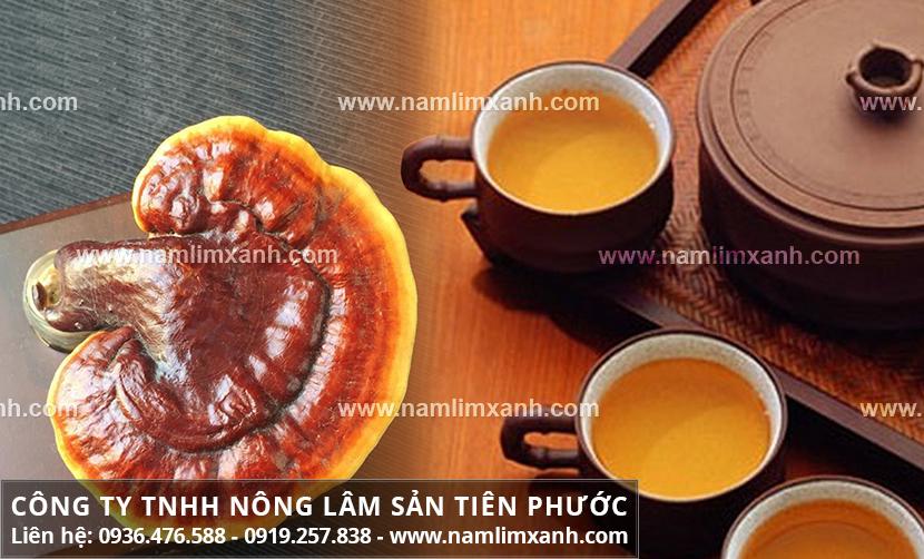 Phương pháp chế biến nấm lim xanh và sử dụng nấm lim xanh Quảng Nam