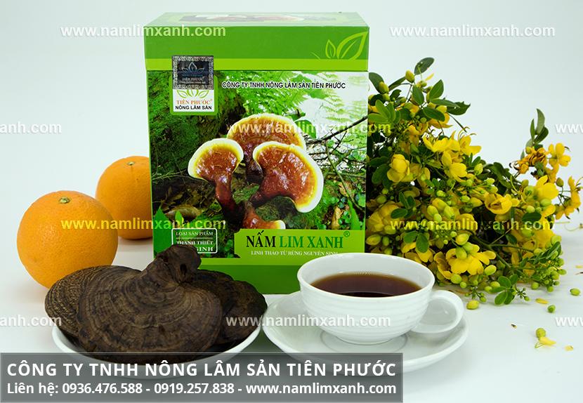Nấm lim xanh Tiên Phước Quảng Nam và tác dụng cây nấm lim xanh rừng