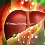 Nấm lim xanh chữa bệnh viêm gan: Hiệu quả từ tác dụng của nấm lim