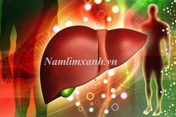 Nấm lim xanh rừng Quảng Nam hỗ trợ điều trị bệnh viêm gan hiệu quả