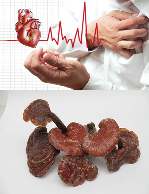 Dùng nấm lim xanh thường xuyên sẽ giảm nguy cơ mắc bệnh tim mạch và nhiều bệnh khác.
