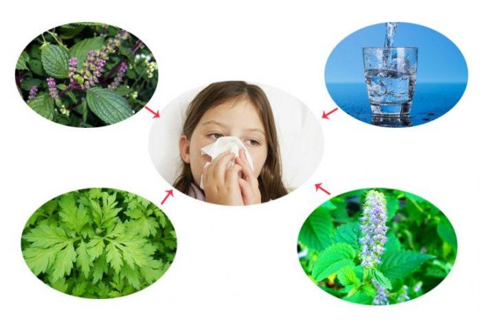 Bài thuốc dân gian từ hoắc hương điều trị cảm cúm, nhức đầu.