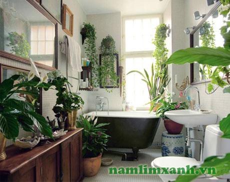 Cây xanh vừa làm đẹp vừa thanh lọc không khí trong nhà