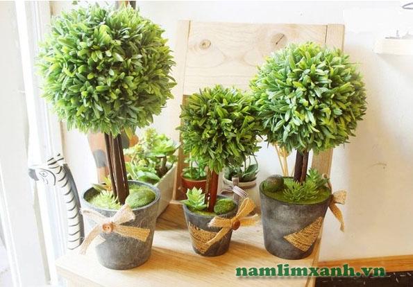 Cây xanh được coi là mẹ thiên nhiên trong việc điều hòa không khí