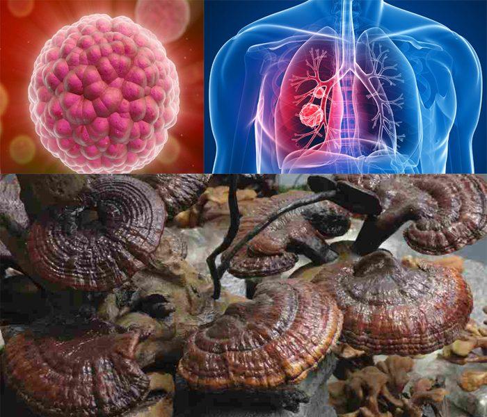 Công dụng của nấm lim xanh là điều trị các loại bệnh ung thư.