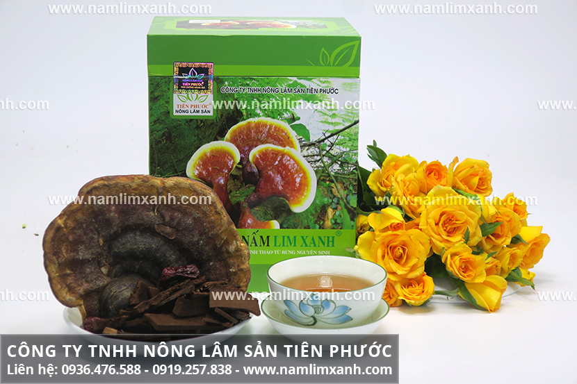Mua nấm lim xanh ở TPHCM tại địa chỉ nào và giá bán nấm lim xanh rừng