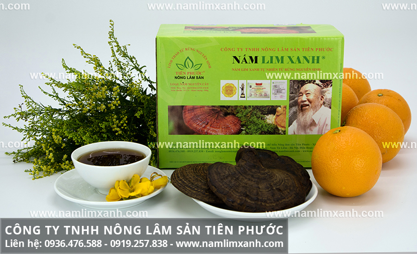 Nấm lim xanh giảm cân nhanh an toàn và giá nấm lim xanh rừng Quảng Nam