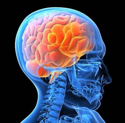 thảo dươc ngăn ngừa tai biến mạch máu não namlimxanh.vn