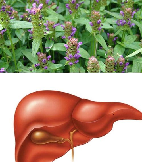 Bài thuốc nam chữa viêm gan C với cây nhân trần