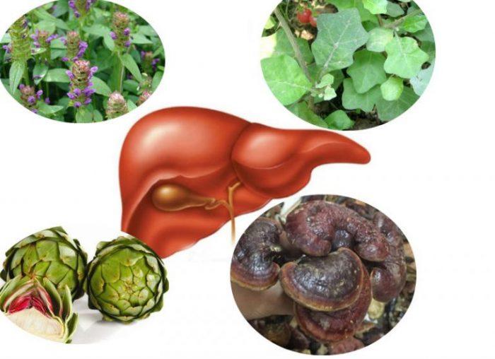 Bài thuốc nam chữa viêm gan C từ nhân trần, cà gai leo, nấm lim xanh và atiso