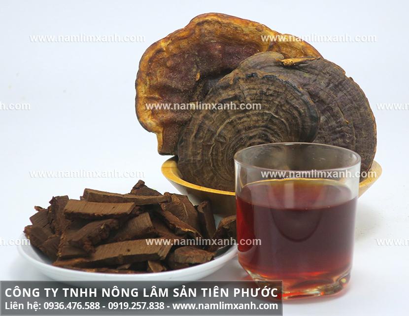 Cách dùng nấm lim xanh rừng và công dụng của nấm lim xanh Tiên Phước