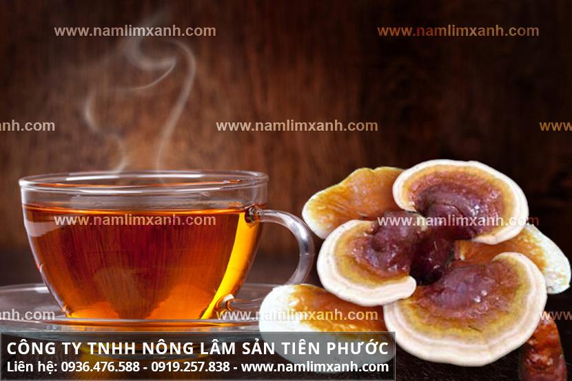 Cách dùng nấm lim xanh Tiên Phước hiệu quả cách nấu uống nấm lim rừng