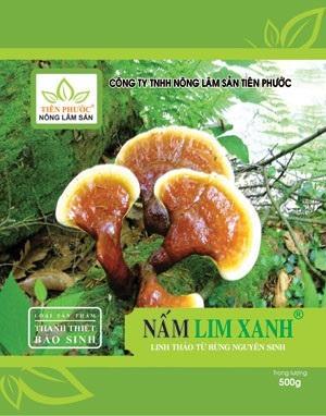 Chữa bệnh nan y hiệu quả nhờ nấm lim xanh Quảng Nam