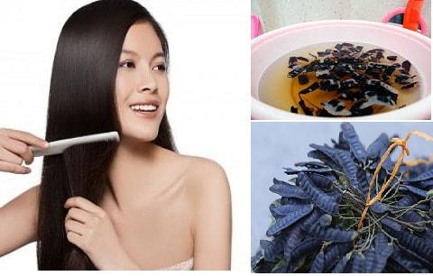 Chữa rụng tóc bằng thuốc nam như bồ kết là phương pháp đơn giản, hiệu quả