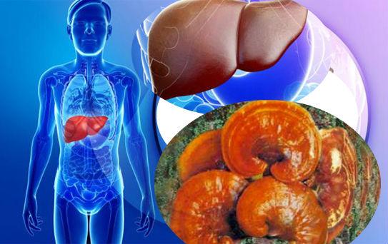 Chế độ ăn cho người viêm gan với một số loại thực - dược phẩm như nấm lim xanh