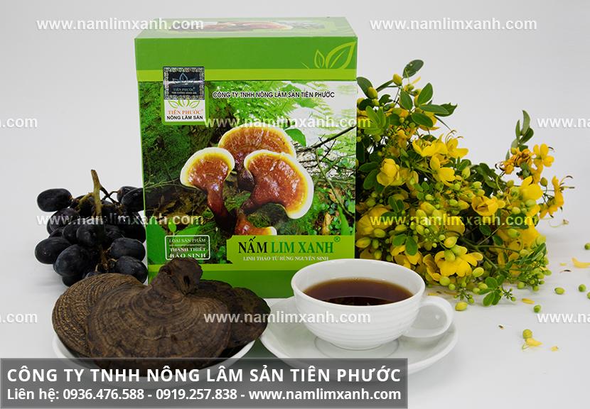 Tác dụng của cây nấm lim xanh và cách dùng nấm lim rừng Tiên Phước
