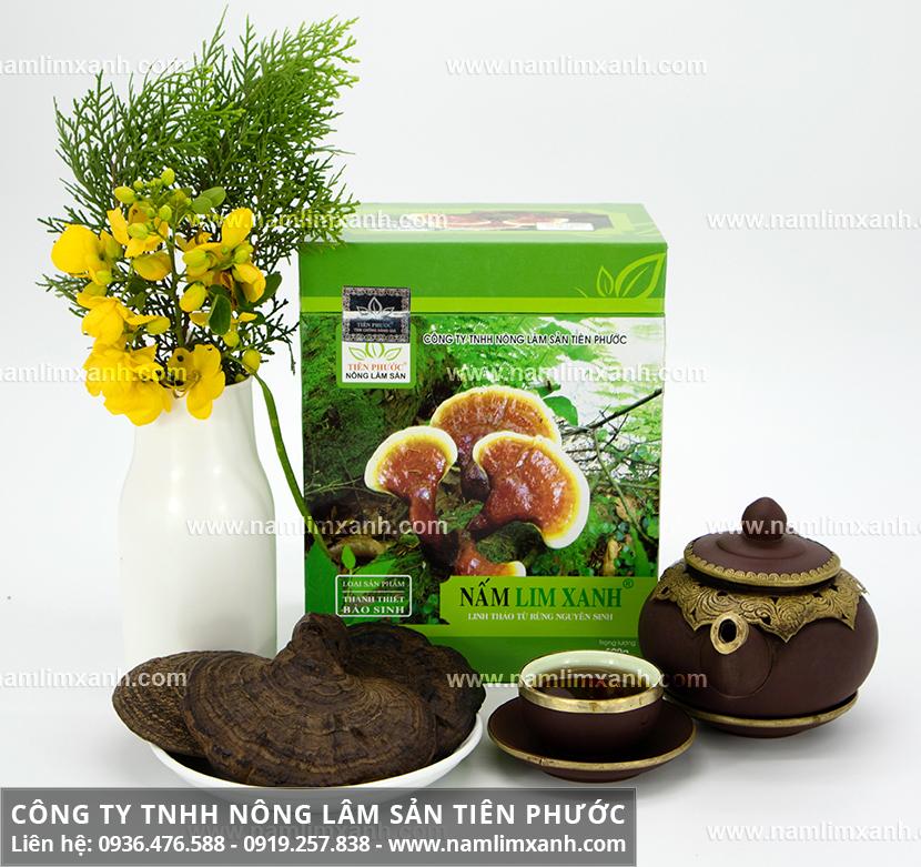 Tác dụng của nấm lim xanh Quảng Nam trong điều trị bệnh gout hiệu quả