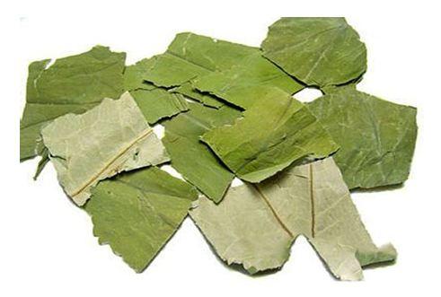 thảo dược giảm mỡ máu nhanh nấm lim xanh