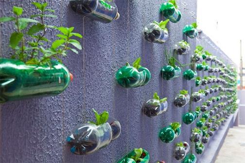 cuộc sống xanh với các hành động thiết thực ý nghĩa nấm lim xanh