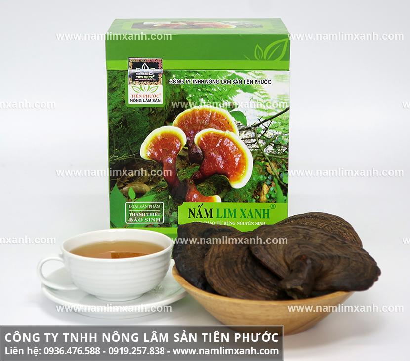 Nấm lim xanh chữa bệnh men gan cao với tác dụng nấm lim rừng tự nhiên