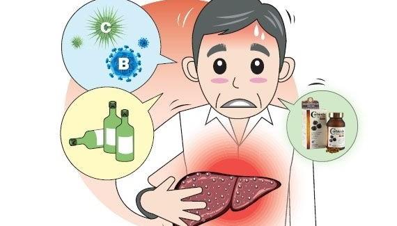 Nấm lim xanh chữa bệnh men gan cao