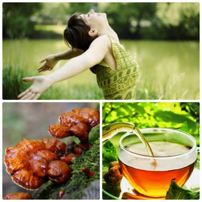 Nấm lim xanh - thảo dược thiên nhiên tốt cho sức khỏe