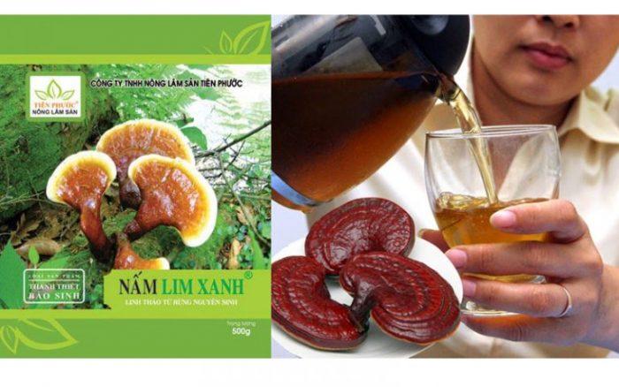 Dược liệu quý ở Tiên Phước - nấm lim xanh có thể chữa được nhiều loại bệnh.