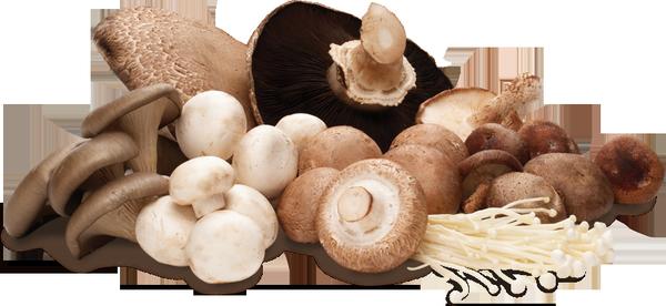 Giá trị sức khỏe ít ai ngờ tới từ các loại nấm