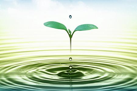 Những điều đơn giản giúp cuộc sống xanh hơn ở quanh ta