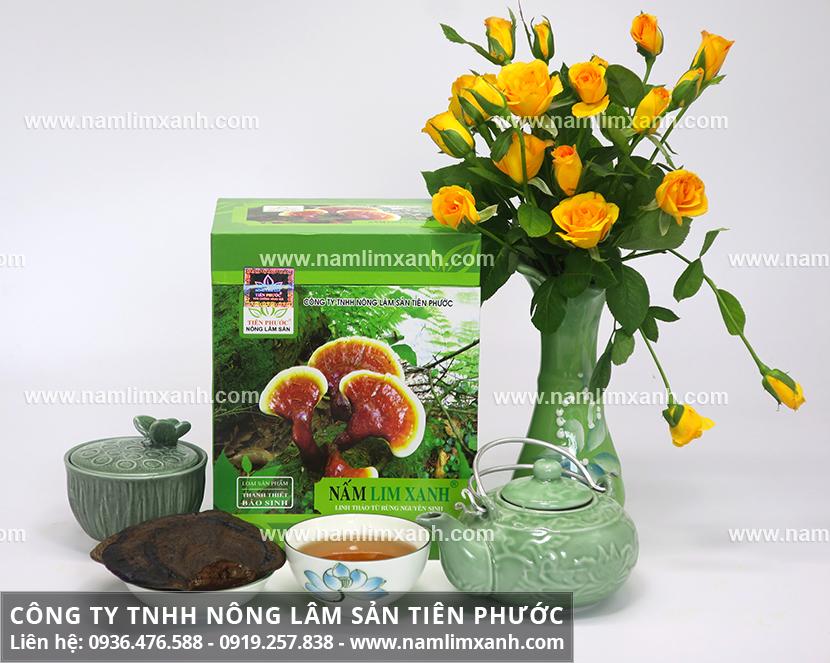 Nấm lim xanh Tiên Phước với đặc điểm của cây nấm lim rừng Tiên Phước