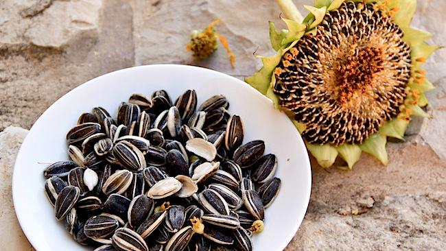 Hạt hướng dương là một trong những thực phẩm gây ung thư cao