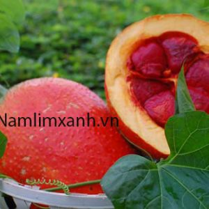 5 thực phẩm ngừa ung thư hiệu quả thường gặp