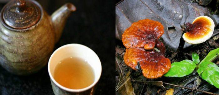 Uống nấm lim xanh để tránh biến chứng của bệnh máu nhiễm mỡ