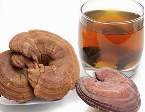 Nấm lim xanh được coi là thần dược và là đồ uống cho người máu nhiễm mỡ